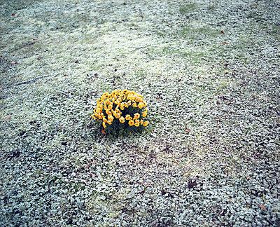 Wintergras - p2600062 von Frank Dan Hofacker