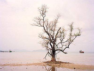 Baum - p751m1584794 von Dieter Schwer