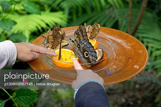 Schmetterlinge entdecken - p1308m2057145 von felice douglas