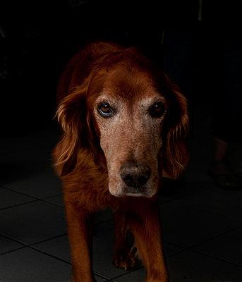 Dog - p1151m956044 by Laure Ledoux