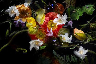 Blumen Stillleben - p1294m1559410 von Sabine Bungert