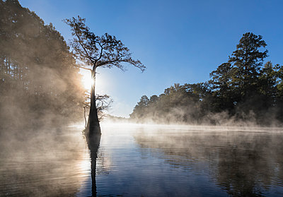 USA, Texas, Louisiana, Caddo Lake, Big Cypress Bayou, bald cypress forest - p300m1449285 by Fotofeeling