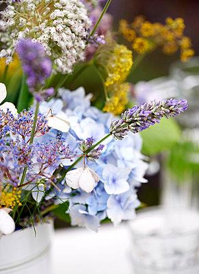 Variety of wildflowers;  Isle of Wight;  UK - p349m920080 by Rachel Whiting