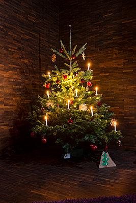 Weihnachtsbaum - p427m1538848 von R. Mohr