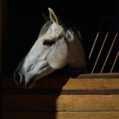 Pferd - p829m918998 von Régis Domergue