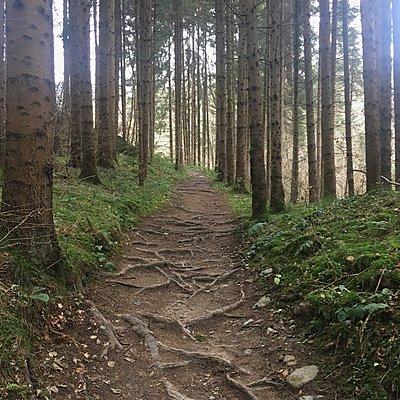 Waldweg mit vielen Wurzeln - p1401m2229892 von Jens Goldbeck