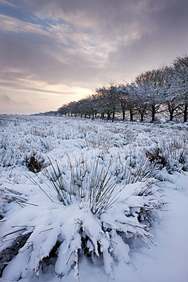 Snow covered countryside and trees, Exmoor, Somerset, England, United Kingdom, Europe - p871m711413 by Adam Burton