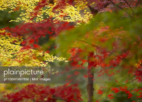 p1100m1497856 von Mint Images