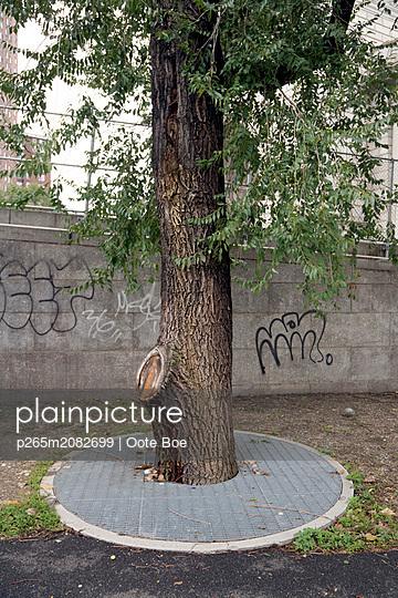 Single tree in New York - p265m2082699 by Oote Boe