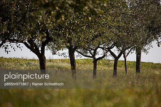 p855m971867 von Rainer Schoditsch