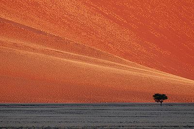 Namib - p1065m885971 von KNSY Bande
