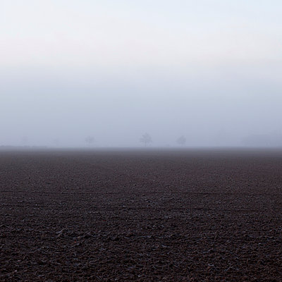 3 Trees in the mist - p1138m953328 by Stéphanie Foäche