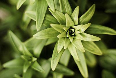 Green plants in garden. - p1166m2078024 by Cavan Images