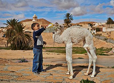 Little boy feeds dromedary - p390m1011450 by Frank Herfort