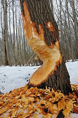 Déforestation - p816m745415 by Thorfinn Bekkelund