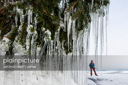 Icicles on pine branches, ice-skater on background - p312m2118637 by Johner
