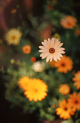 flower bloom garden petals - p3430665 by Lars Howlett