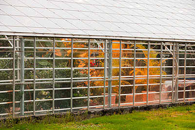 Greenhouses heated by geothermal heat nearÊGeysirÊin Iceland - p343m2046960 by Ashley Cooper