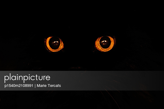 Orange cats eyes in a black background - p1540m2108991 by Marie Tercafs