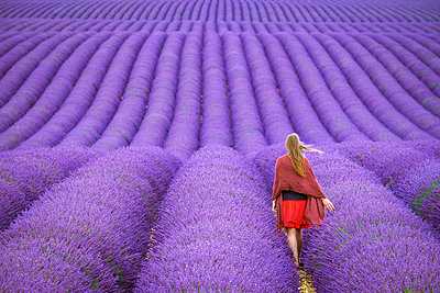 A young woman standing alone between rows of purple lavender in bloom in a field on the Plateau de Valensole - p1166m2136842 by Cavan Images