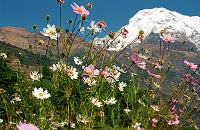 Blumen vor dem Gipfel - p2120028 von Edith M. Balk