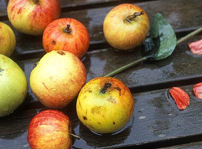 Äpfel im Regen - p2370068 von Thordis Rüggeberg