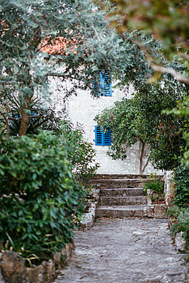 Old stone path with olive trees in the old town of Vrsar - p728m2027216 by Peter Nitsch