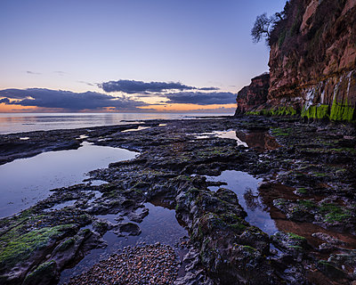 Dawn on the beach with a tree growing precariously from the cliff at Ladram Bay, Sidmouth, Devon, England, United Kingdom - p871m2113736 by Baxter Bradford