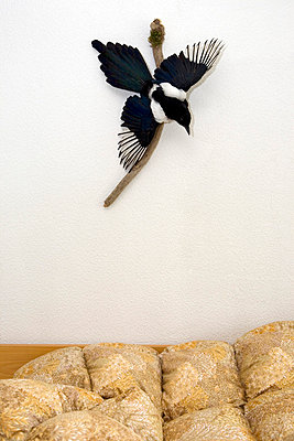 Blanket - p3270216 by René Reichelt