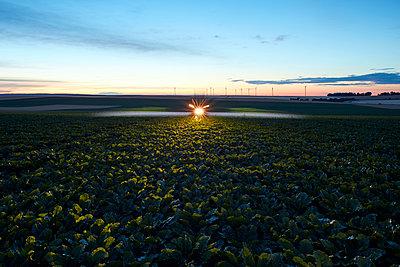 Crop spraying at twilight - p719m1446426 by Rudi Sebastian