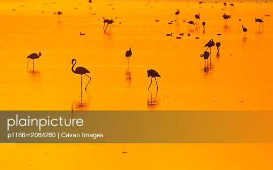 p1166m2084280 von Cavan Images