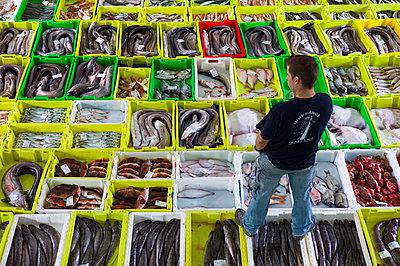Freshly-caught fish at Confradia de Pescadores de Luarca - p871m884465 by Tim Graham