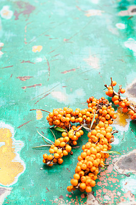Twigs with sea-buckthorn berries  - p922m2071553 by Juliette Chretien