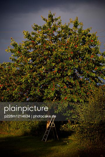 p228m1214634 by photocake.de