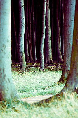 Dark forest - p4320722 by mia takahara