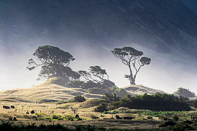East Cape, North Island - p1369m1222392 by Chris Hooton