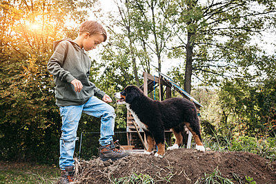 Boy playing with his Bernese mountain dog in the garden - p300m2144063 von Epiximages