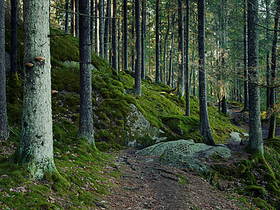 Path through forest - p312m1164830 by Stefan Isaksson
