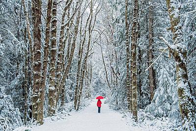 Woman in spruce forest, Bainbridge Island, Washington, US - p924m1230250 by Pete Saloutos
