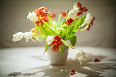 Verwelkende Tulpen - p1418m1572164 von Jan Håkan Dahlström