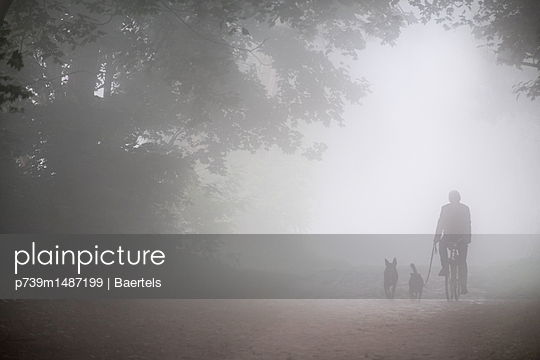 Cyclist and dogs in the early morning mist - p739m1487199 by Baertels