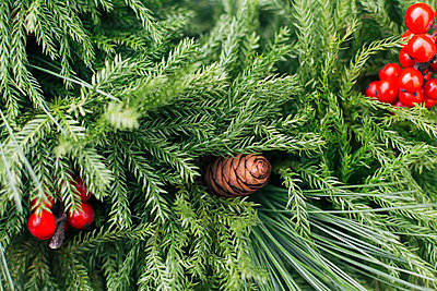 Pine fronds and pine cones - p1427m2066722 by Kristin Lee