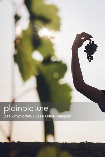 Woman holding grapes in Hand - p1150m2127045 by Elise Ortiou Campion