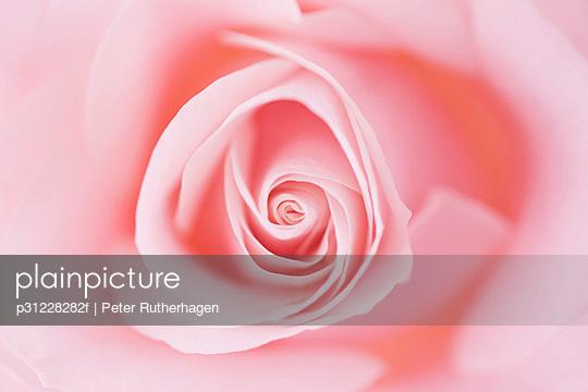 p31228282f von Peter Rutherhagen