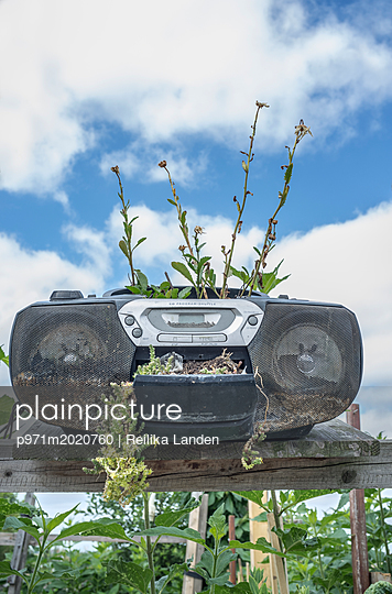 Radio as flowerpot - p971m2020760 by Reilika Landen