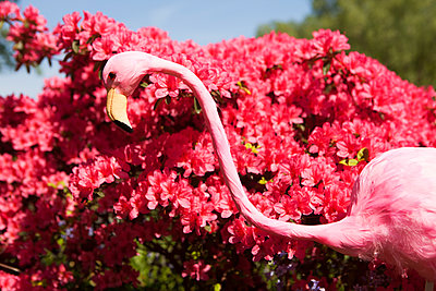 Rhododendron - p045m1154721 by Jasmin Sander