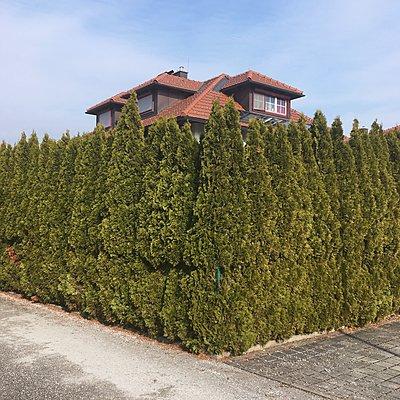 Wohnhaus hinter einer Hecke - p1401m2063080 von Jens Goldbeck