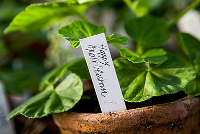 Geranium in pot with sign - p312m1532958 by Lisa Wikstrand