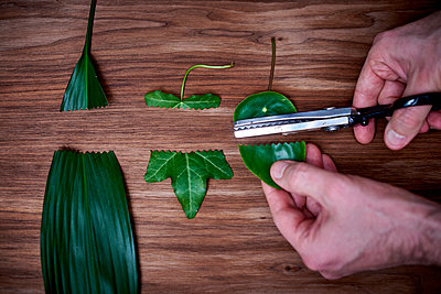 Cutting leaves - p312m1192879 by Pernilla Hed