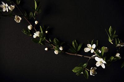 Blüten im Dunkeln - p1054m2278013 von Maria Kazvan